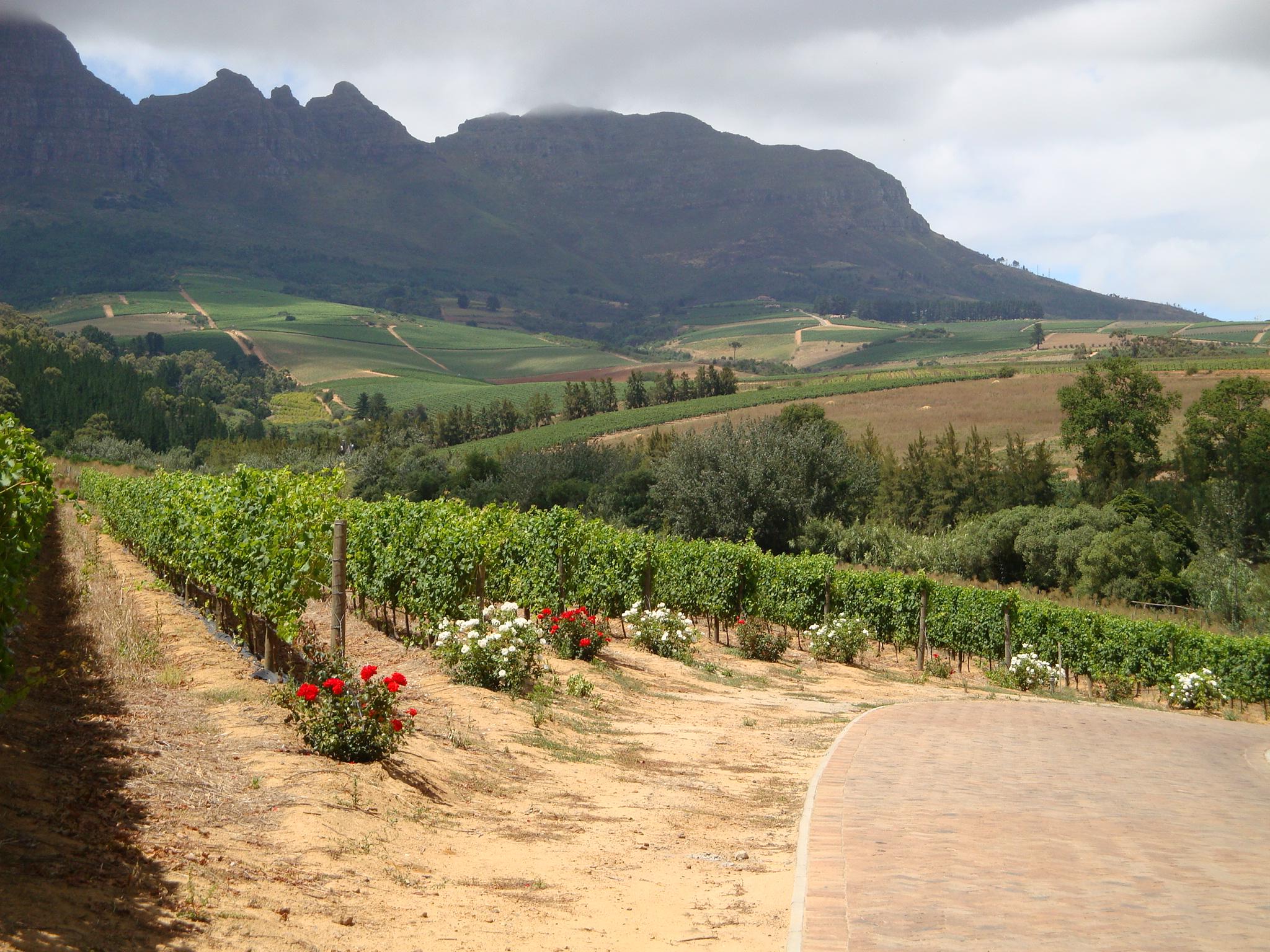 Gourmet Wine Tours