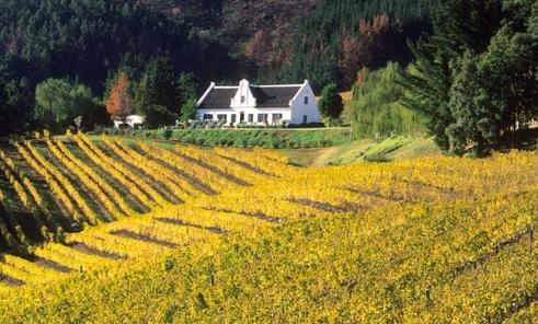 Go Cape Tourism Services Private Wine Tours